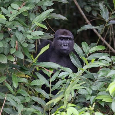 Conservation des espèces - ZooParc de Beauval