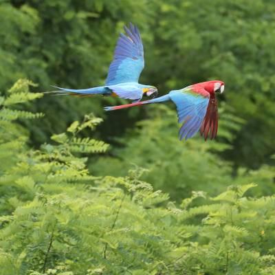 spectacle d'oiseaux - ZooParc de Beauval